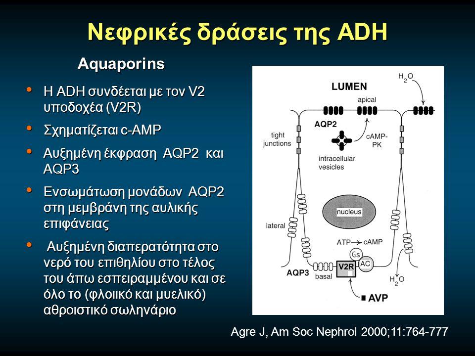 Νεφρικές δράσεις της ADH