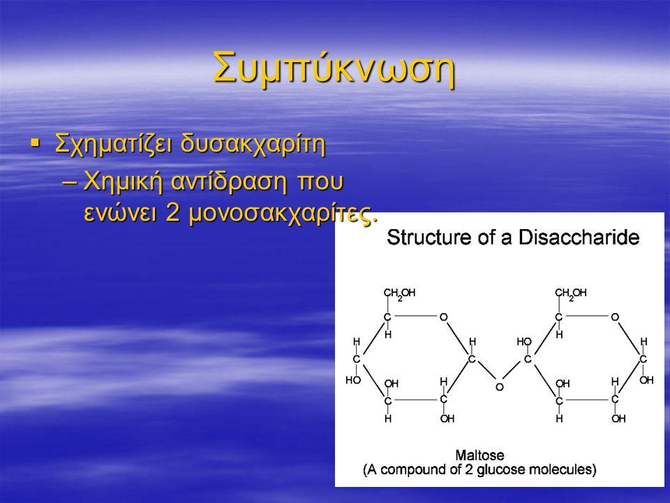 Συμπύκνωση Σχηματίζει δυσακχαρίτη