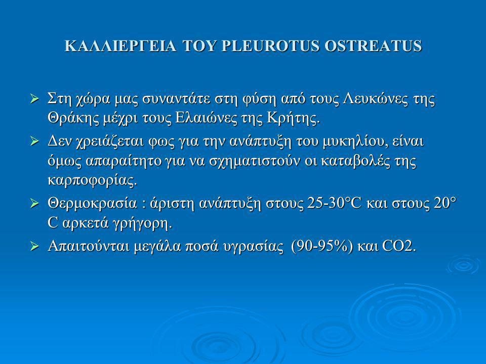 ΚΑΛΛΙΕΡΓΕΙΑ ΤΟΥ PLEUROTUS OSTREATUS