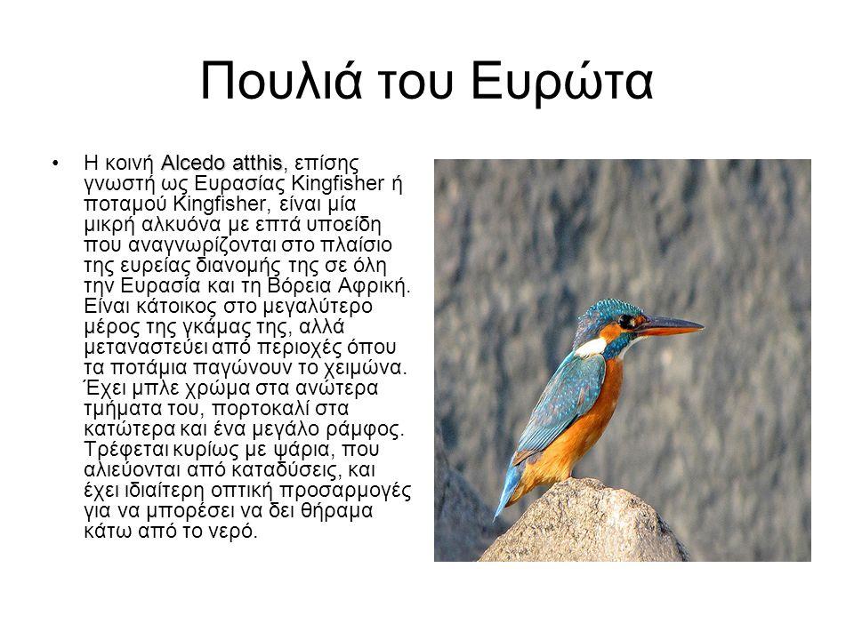 Πουλιά του Ευρώτα