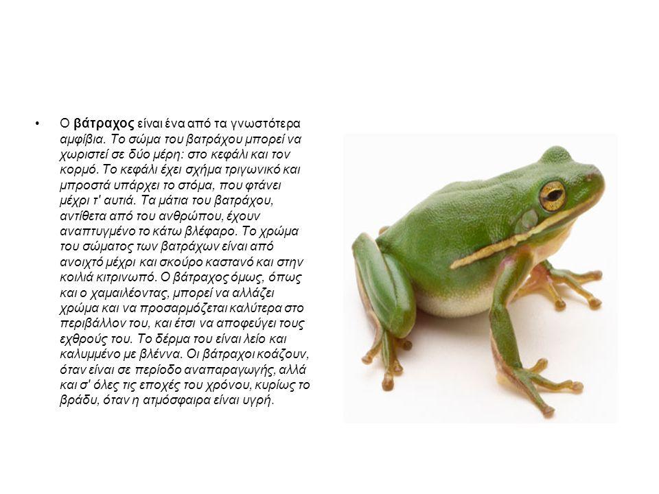 Ο βάτραχος είναι ένα από τα γνωστότερα αμφίβια