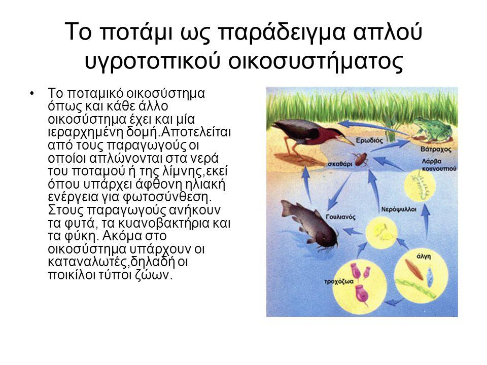 Το ποτάμι ως παράδειγμα απλού υγροτοπικού οικοσυστήματος