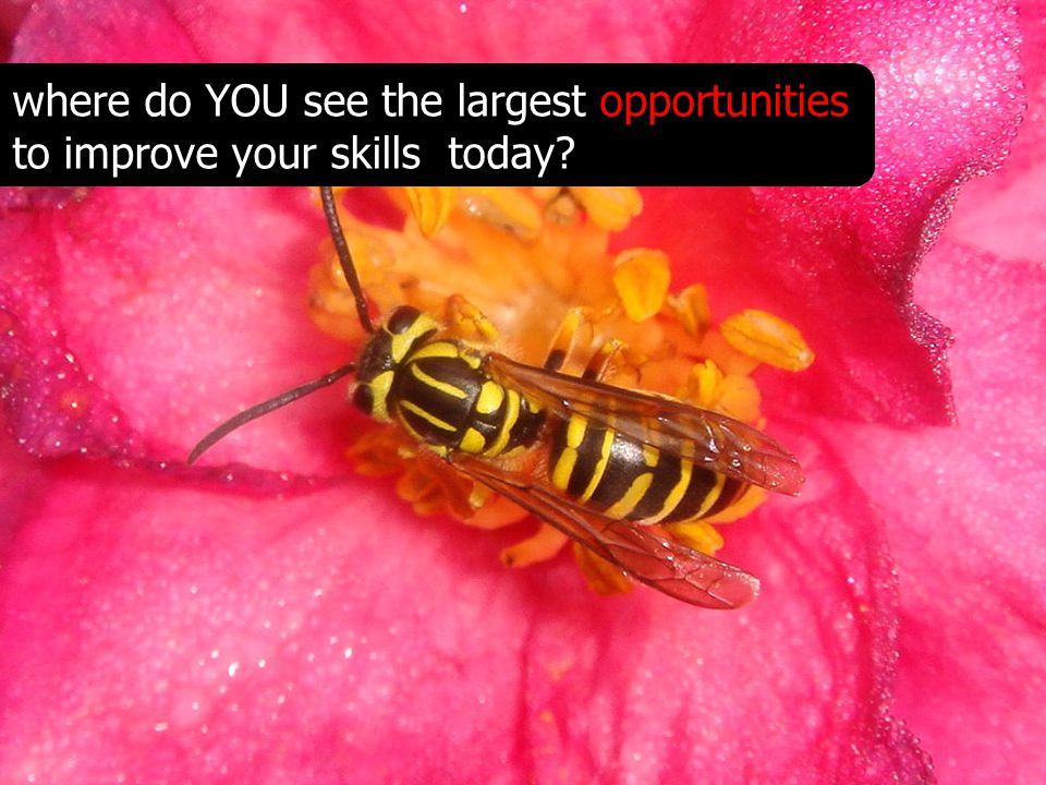 where do YOU see the largest opportunities to improve your skills today