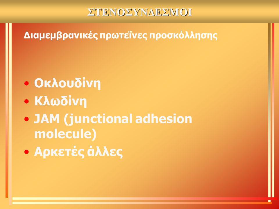 Διαμεμβρανικές πρωτεΐνες προσκόλλησης