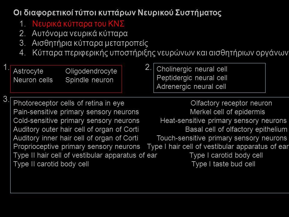 Οι διαφορετικοί τύποι κυττάρων Νευρικού Συστήματος