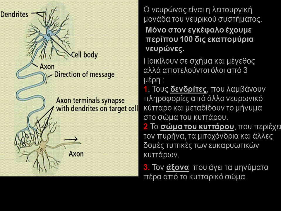Ο νευρώνας είναι η λειτουργική