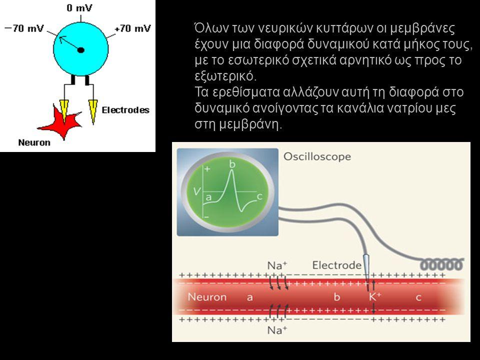 Όλων των νευρικών κυττάρων οι μεμβράνες
