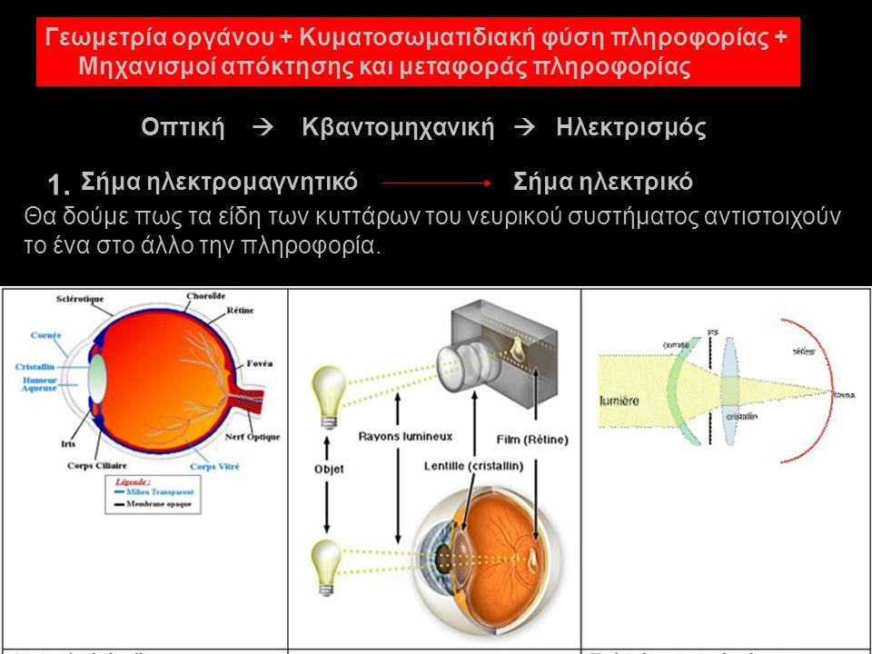 1. Γεωμετρία οργάνου + Κυματοσωματιδιακή φύση πληροφορίας +