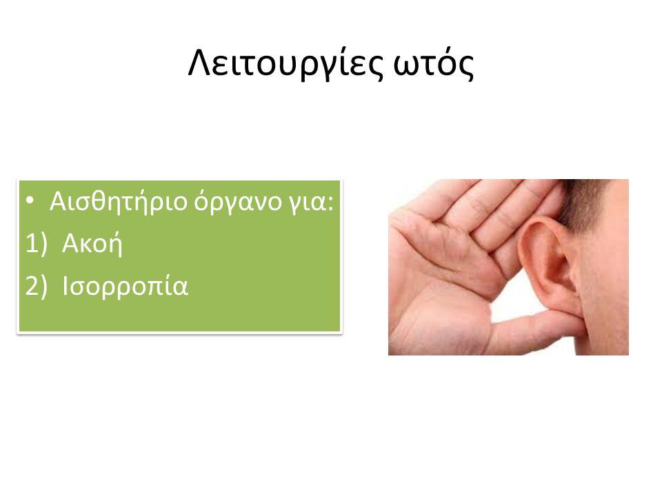 Λειτουργίες ωτός Αισθητήριο όργανο για: Ακοή Ισορροπία