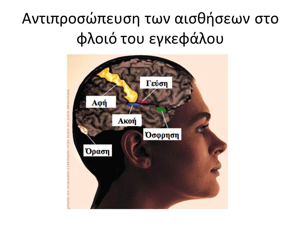 Αντιπροσώπευση των αισθήσεων στο φλοιό του εγκεφάλου