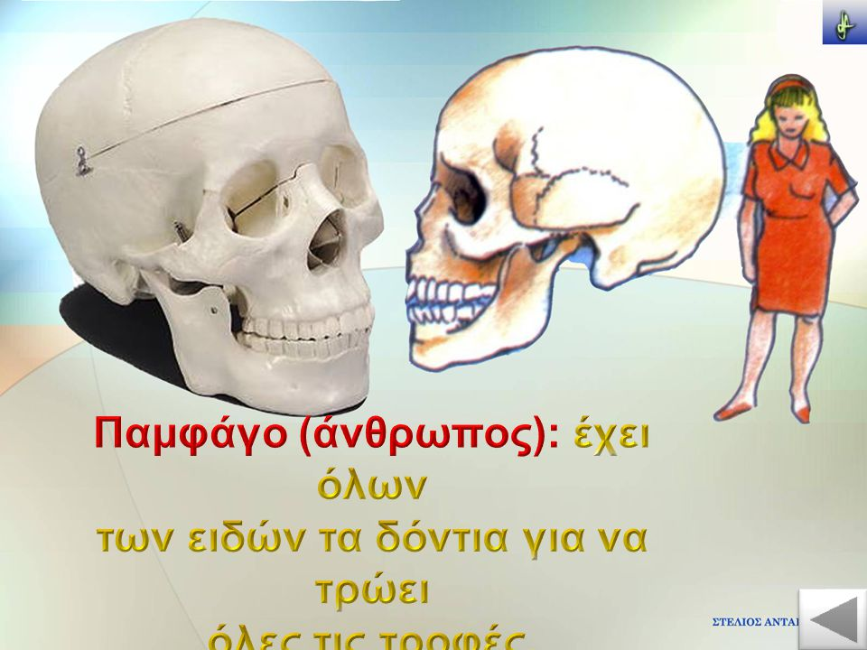 Παμφάγο (άνθρωπος): έχει όλων των ειδών τα δόντια για να τρώει
