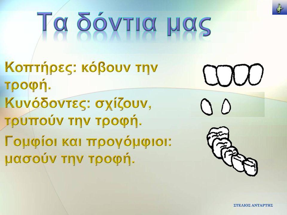 Τα δόντια μας Κοπτήρες: κόβουν την τροφή.