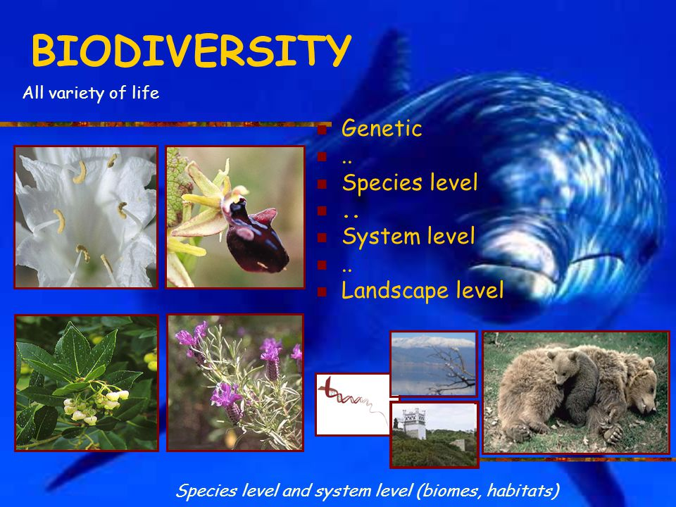 BIODIVERSITY Genetic .. Species level System level Landscape level