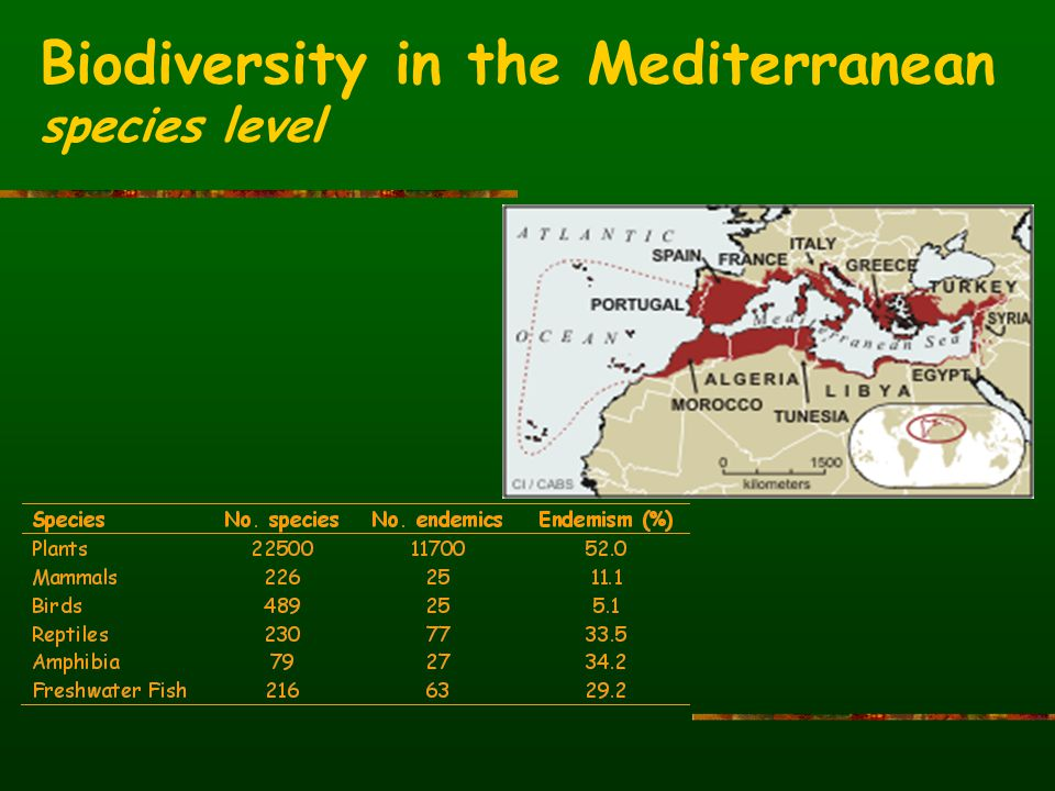 Biodiversity in the Mediterranean species level
