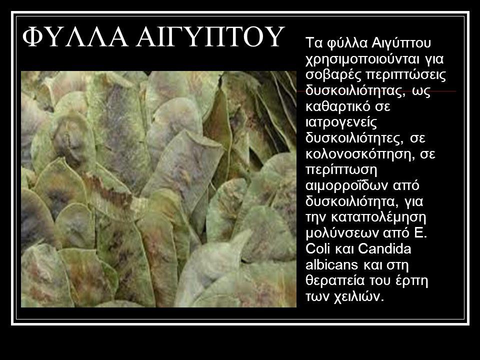 ΦΥΛΛΑ ΑΙΓΥΠΤΟΥ