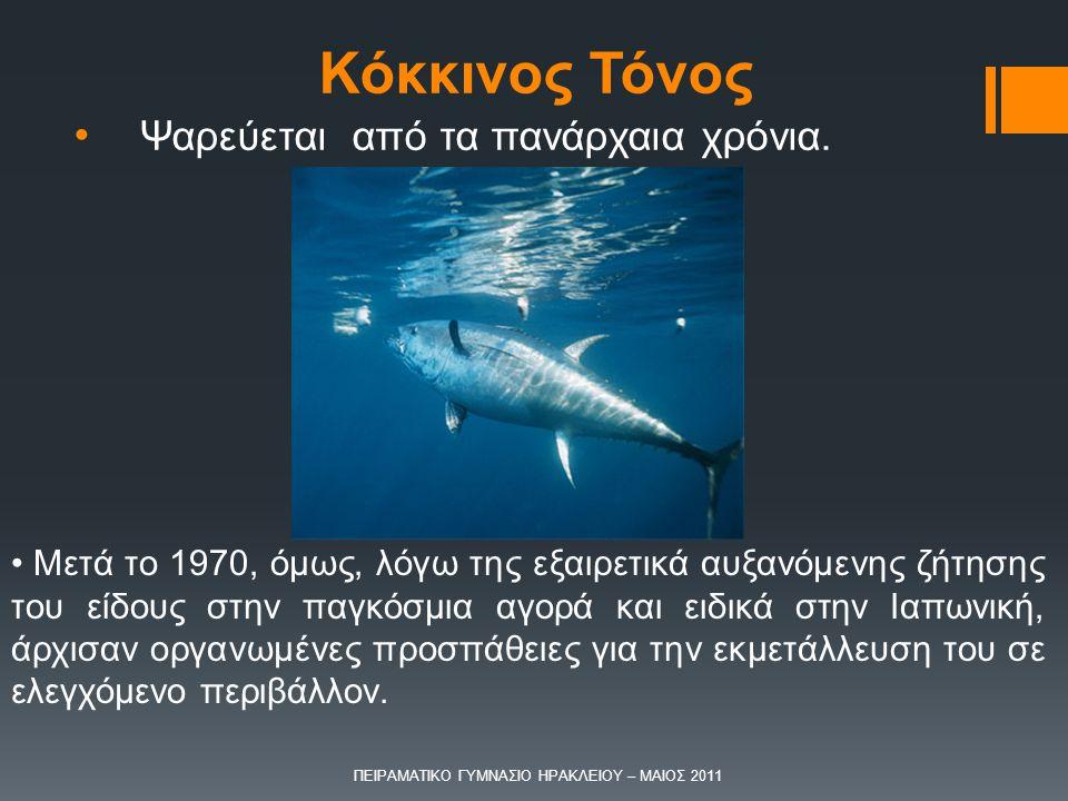 Ψαρεύεται από τα πανάρχαια χρόνια.