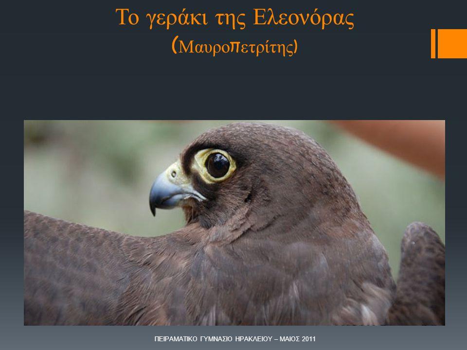 Το γεράκι της Ελεονόρας (Μαυροπετρίτης)