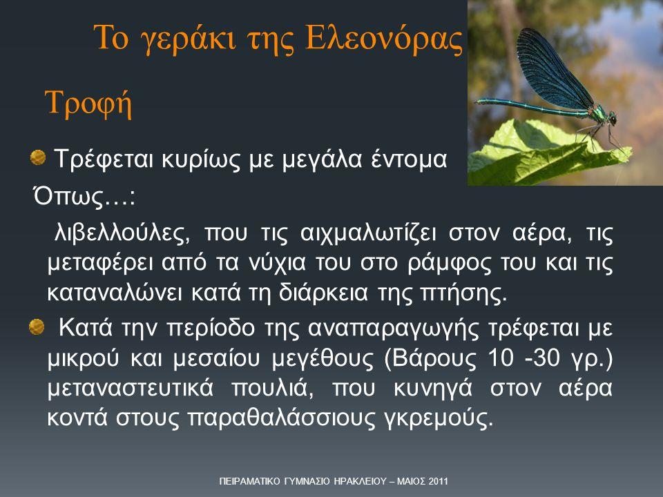 Το γεράκι της Ελεονόρας
