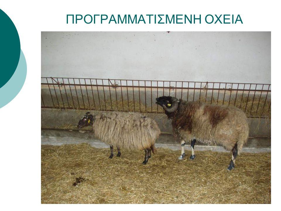ΠΡΟΓΡΑΜΜΑΤΙΣΜΕΝΗ ΟΧΕΙΑ