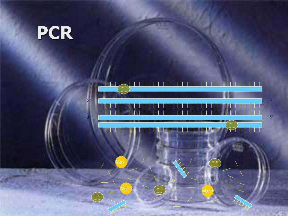 PCR 5' 3' 5' 3' Mg++ Mg++ Mg++