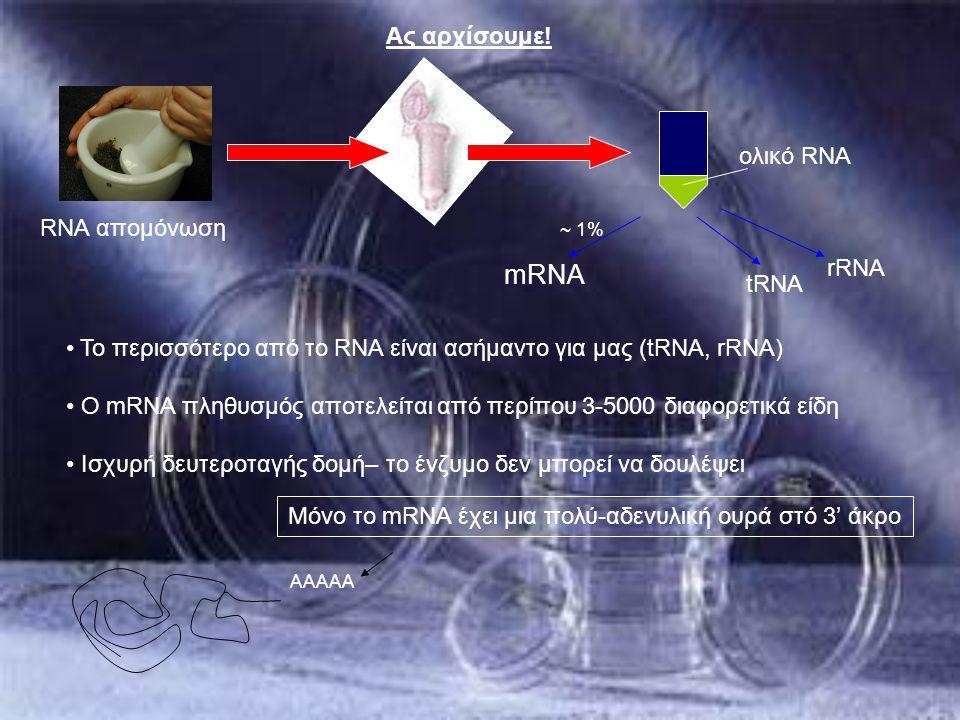 Μόνο το mRNA έχει μια πολύ-αδενυλική ουρά στό 3' άκρο