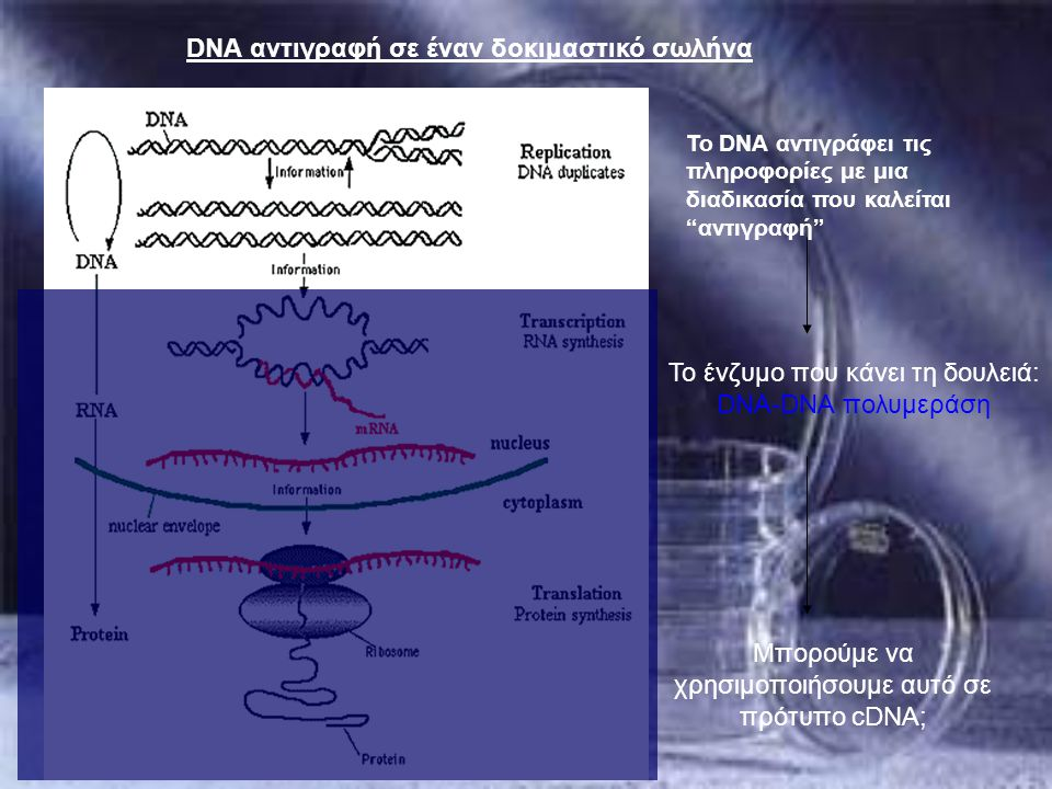 DNA αντιγραφή σε έναν δοκιμαστικό σωλήνα