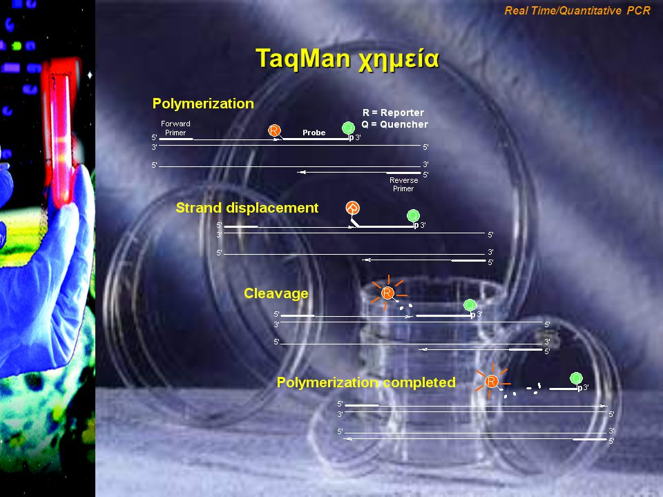 TaqMan χημεία R Real Time/Quantitative PCR