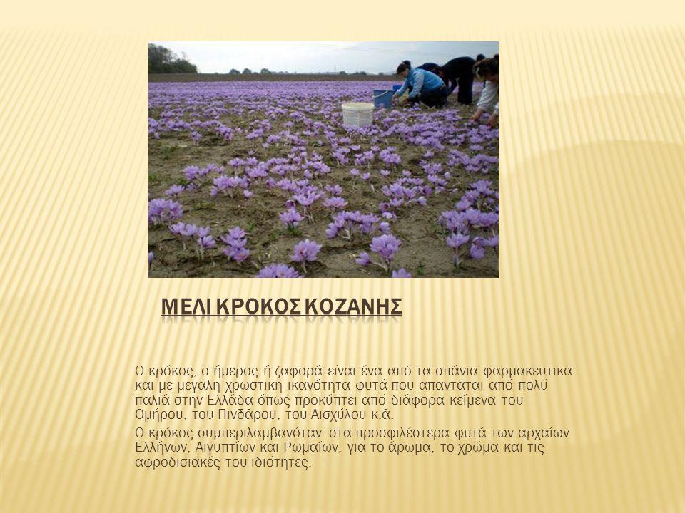 Μελι κροκος κοζανης
