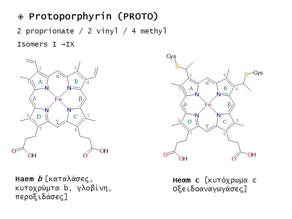  Protoporphyrin (PROTO)