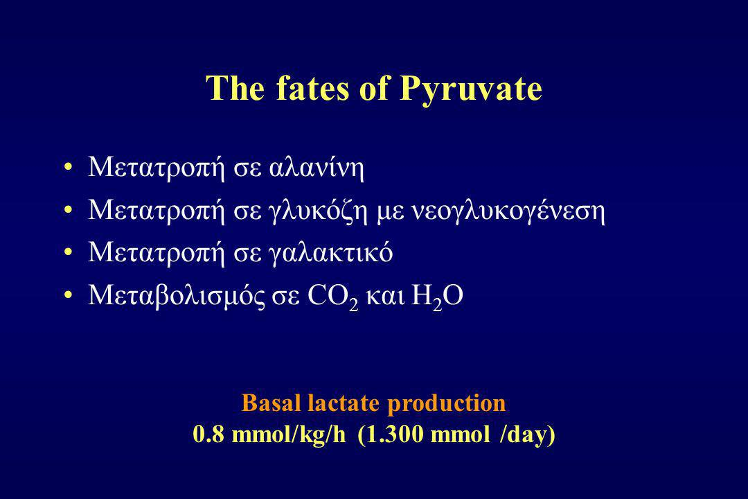 Basal lactate production