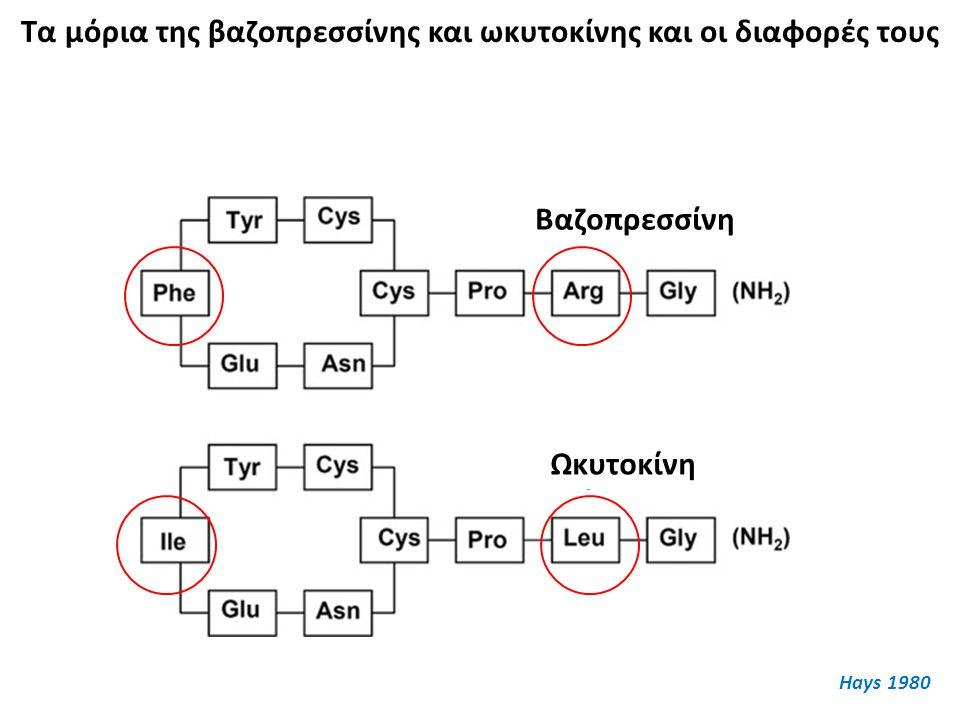 Τα μόρια της βαζοπρεσσίνης και ωκυτοκίνης και οι διαφορές τους