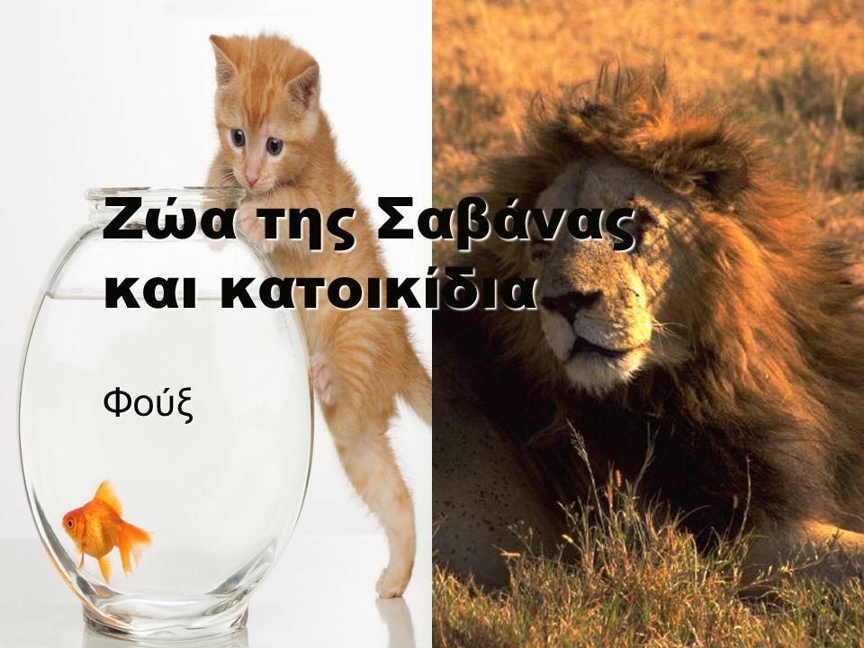 Ζώα της Σαβάνας και κατοικίδια