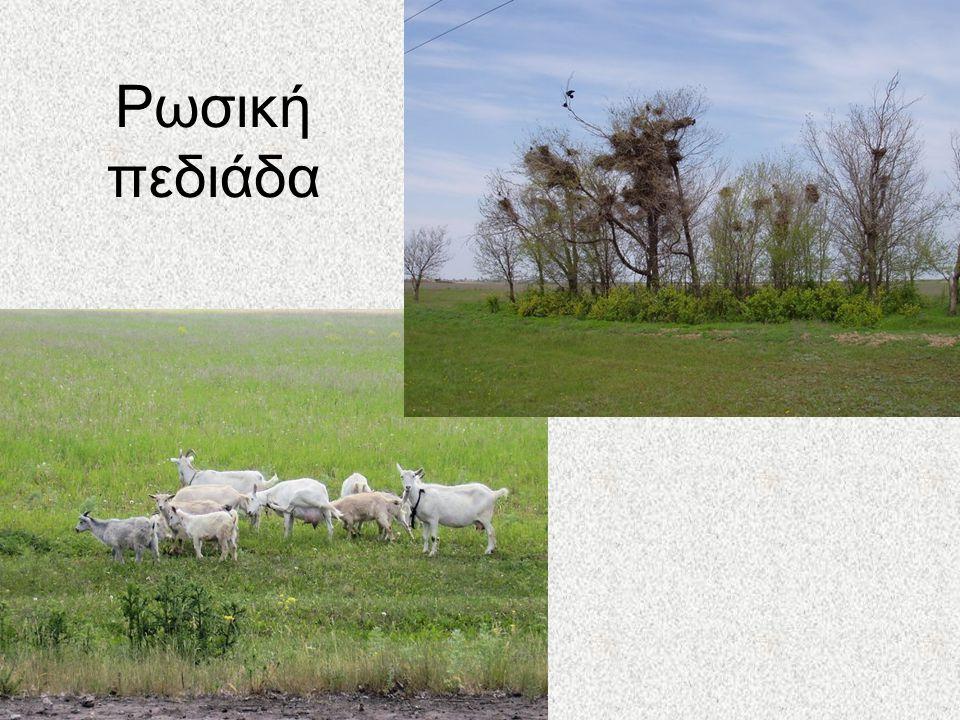 Ρωσική πεδιάδα