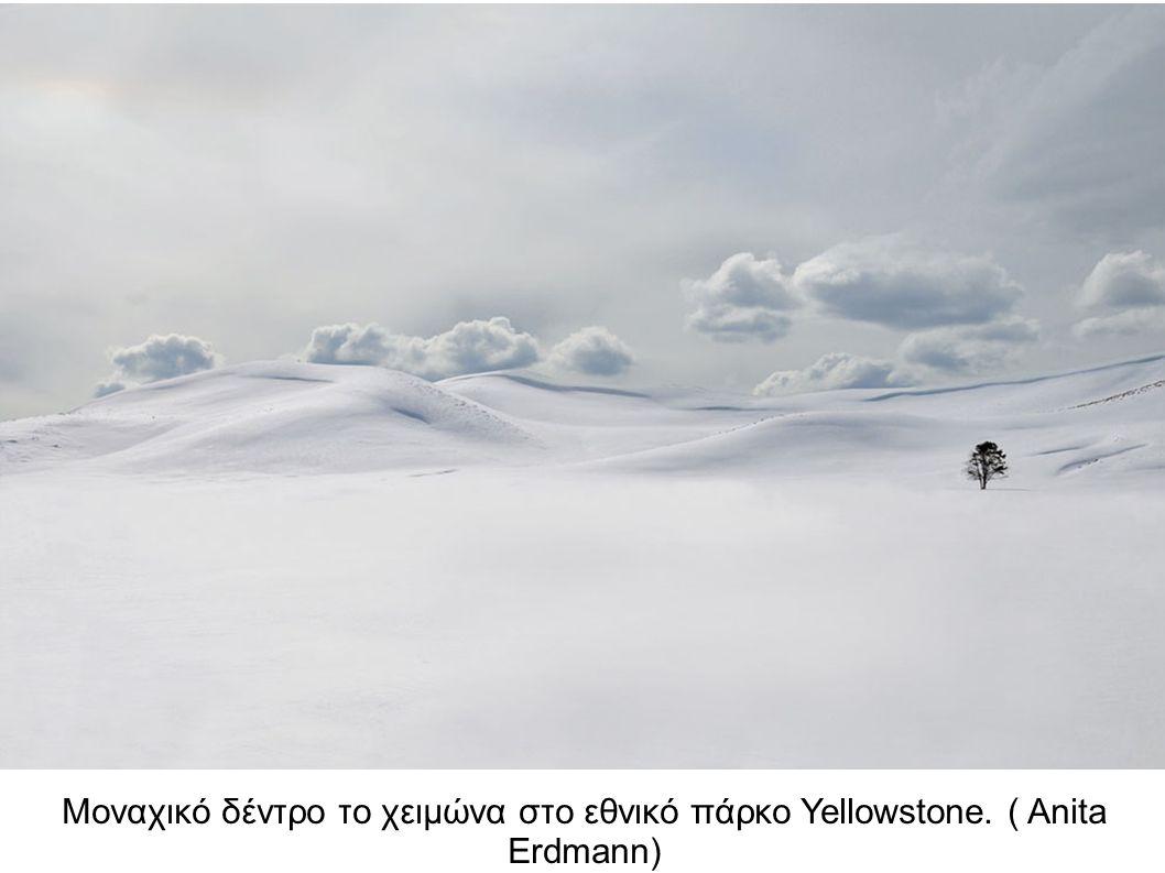 Μοναχικό δέντρο το χειμώνα στο εθνικό πάρκο Yellowstone