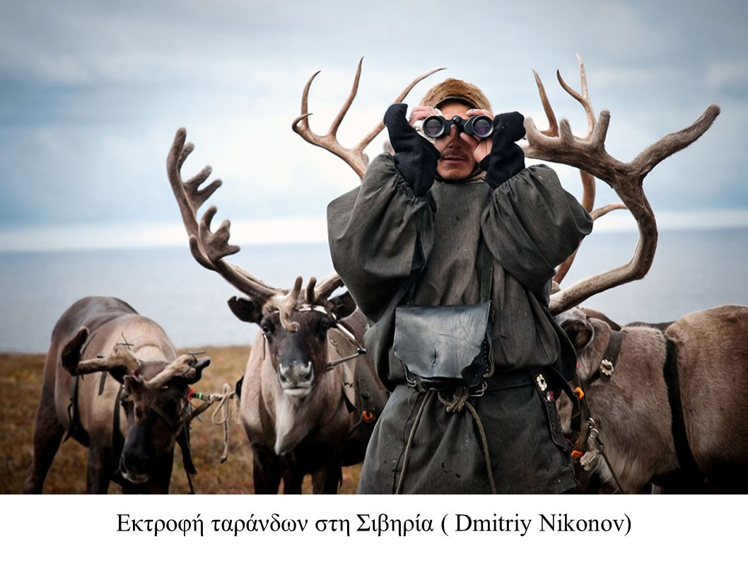 Εκτροφή ταράνδων στη Σιβηρία ( Dmitriy Nikonov)