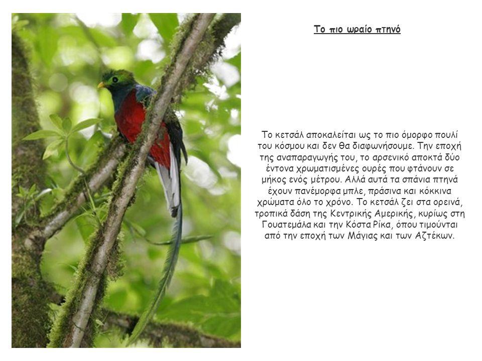 Το πιο ωραίο πτηνό