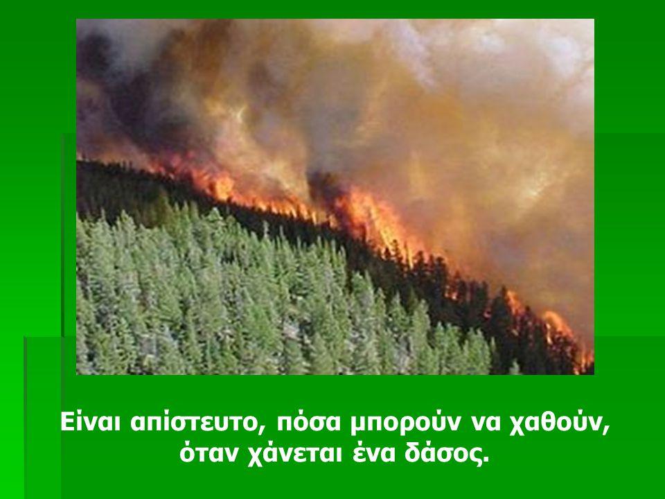 Είναι απίστευτο, πόσα μπορούν να χαθούν, όταν χάνεται ένα δάσος.