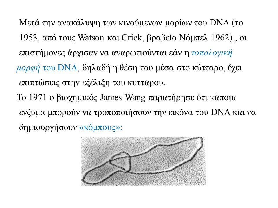 Μετά την ανακάλυψη των κινούμενων μορίων του DNA (το 1953, από τους Watson και Crick, βραβείο Νόμπελ 1962) , οι επιστήμονες άρχισαν να αναρωτιούνται εάν η τοπολογική μορφή του DNA, δηλαδή η θέση του μέσα στο κύτταρο, έχει επιπτώσεις στην εξέλιξη του κυττάρου.