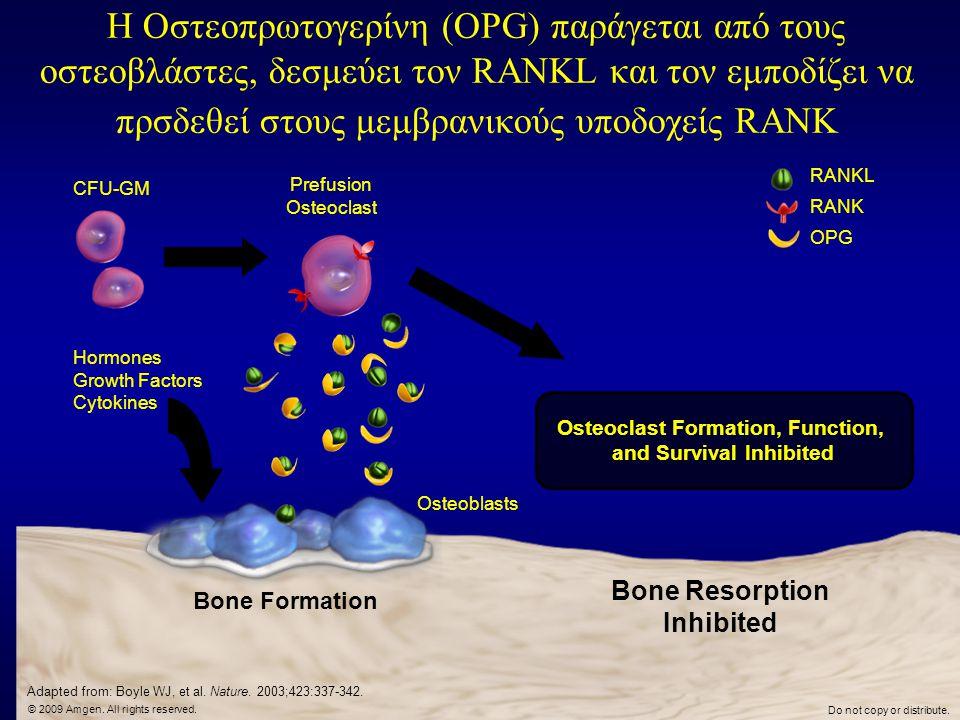 Η Οστεοπρωτογερίνη (OPG) παράγεται από τους οστεοβλάστες, δεσμεύει τον RANKL και τον εμποδίζει να πρσδεθεί στους μεμβρανικούς υποδοχείς RANK
