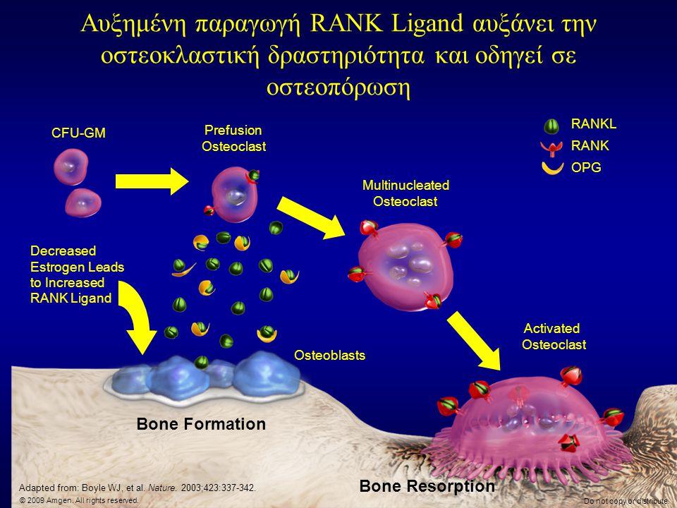 Αυξημένη παραγωγή RANK Ligand αυξάνει την οστεοκλαστική δραστηριότητα και οδηγεί σε οστεοπόρωση