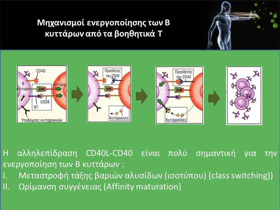 Μηχανισμοί ενεργοποίησης των Β κυττάρων από τα βοηθητικά Τ