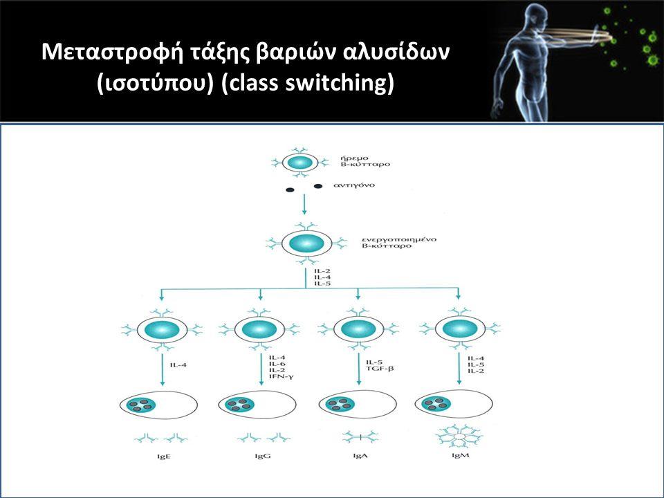 Μεταστροφή τάξης βαριών αλυσίδων (ισοτύπου) (class switching)