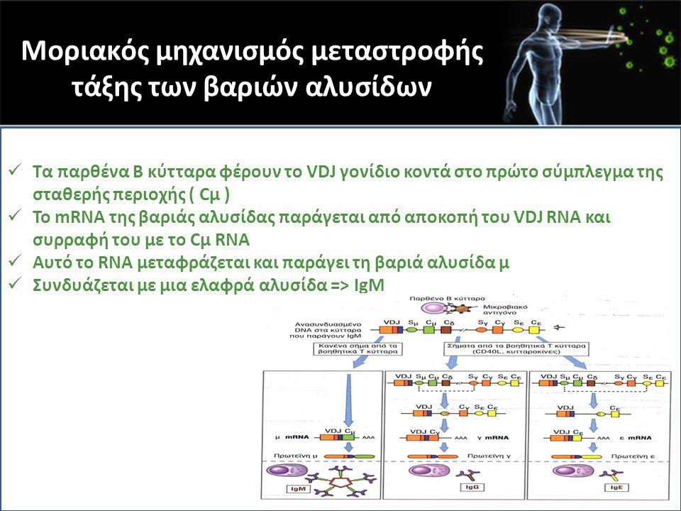 Μοριακός μηχανισμός μεταστροφής τάξης των βαριών αλυσίδων