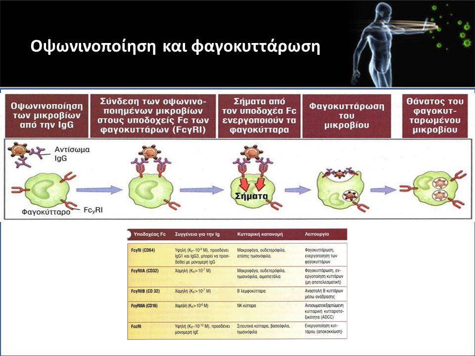 Οψωνινοποίηση και φαγοκυττάρωση