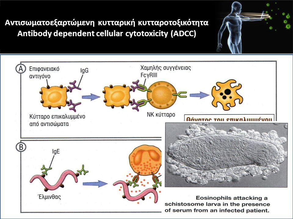 Αντισωματοεξαρτώμενη κυτταρική κυτταροτοξικότητα