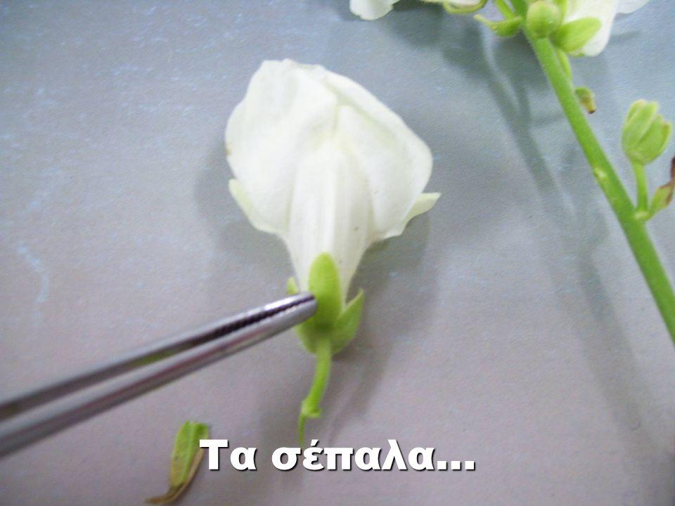 Τα σέπαλα…