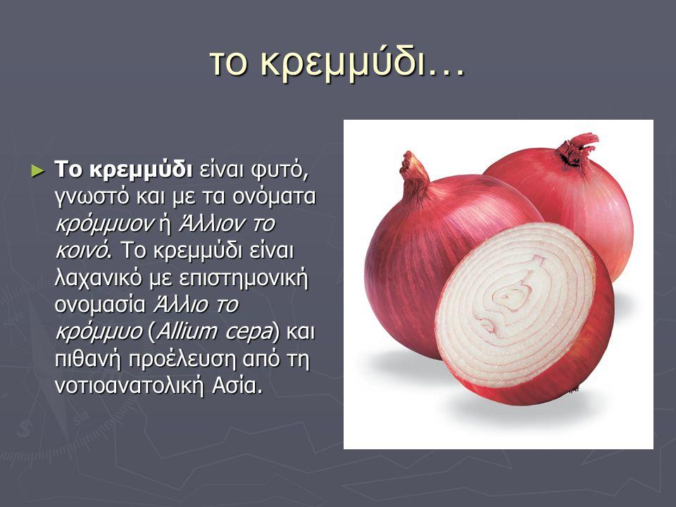 το κρεμμύδι…