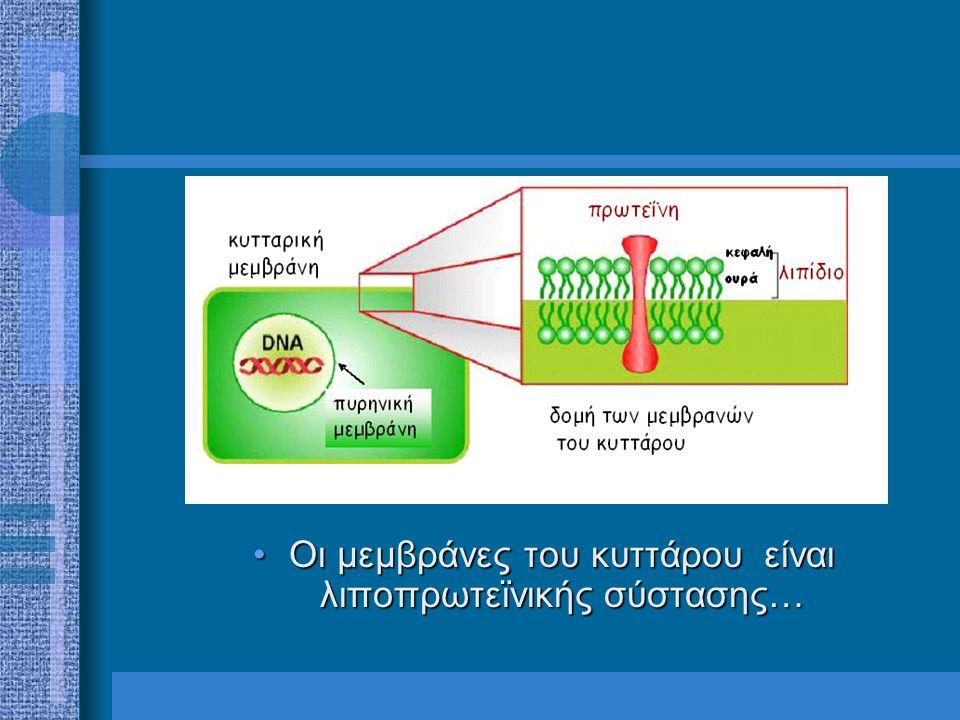 Οι μεμβράνες του κυττάρου είναι λιποπρωτεϊνικής σύστασης…