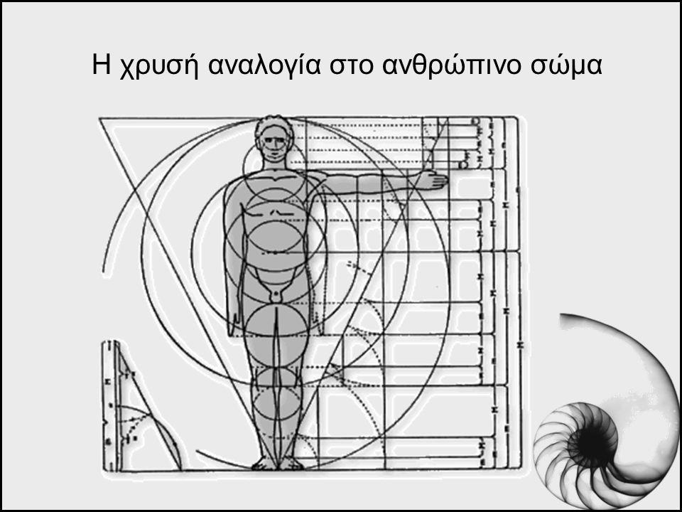 Η χρυσή αναλογία στο ανθρώπινο σώμα
