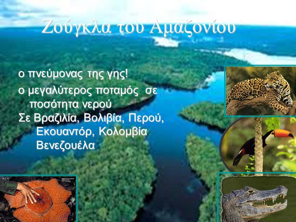 Ζούγκλα του Αμαζονίου ο πνεύμονας της γης!